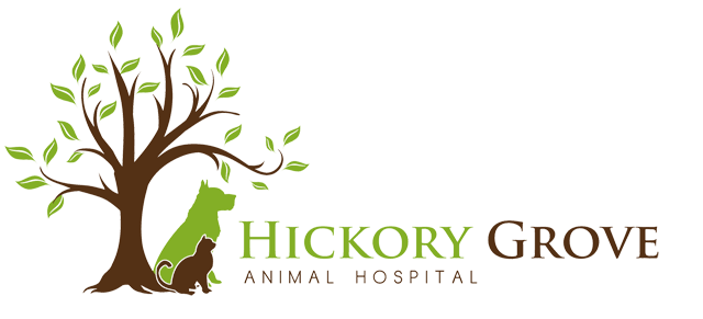 Hickory Grove Animal Hospital